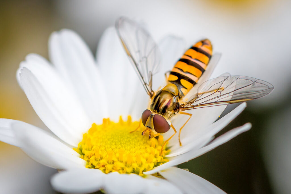The Hoverfly acts just like web visitors do.